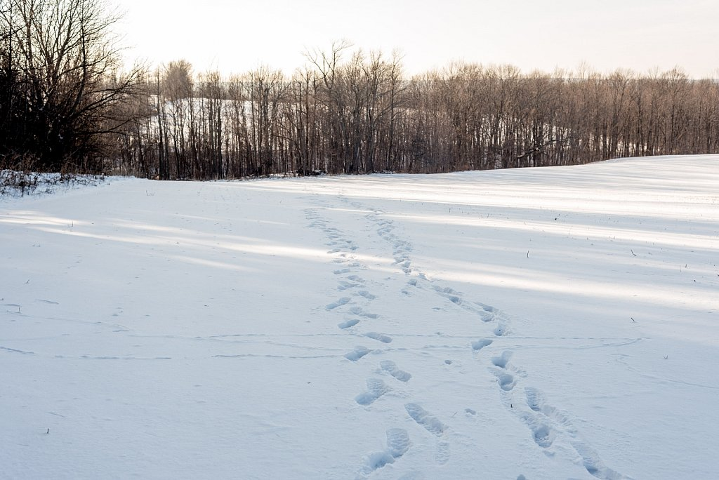 staggering footprints